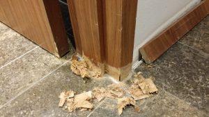 Wasserschaden an Tür reparieren